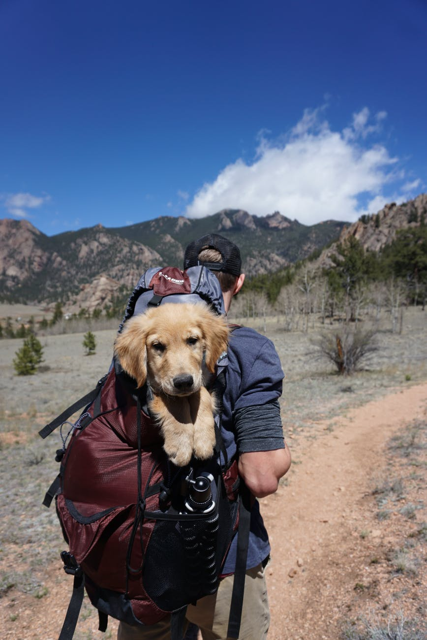 man carrying red and black backpack with yellow labrador retriever puppy while hiking