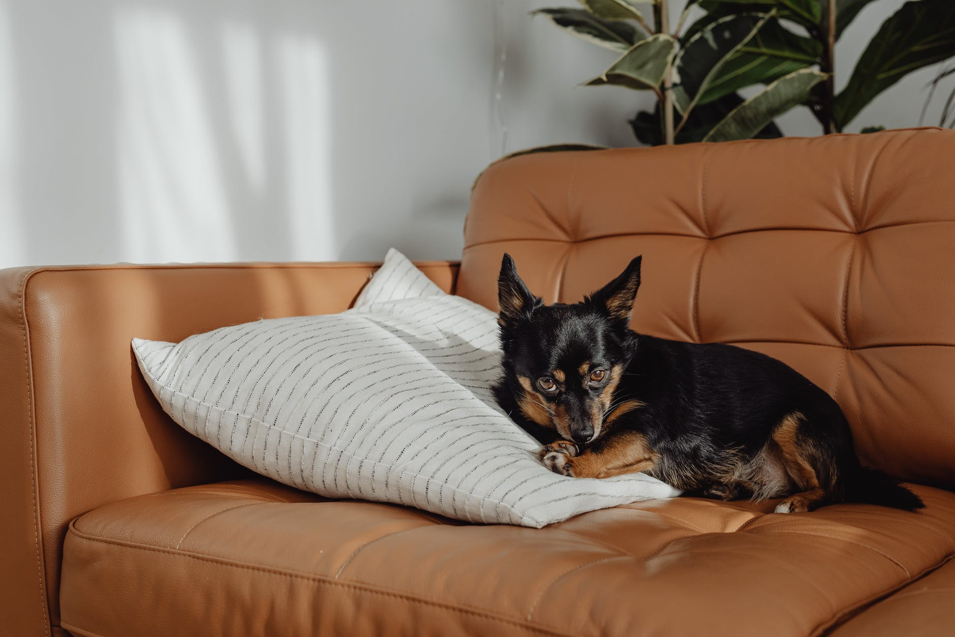 dog relaxation in hotel bed bedroom holiday