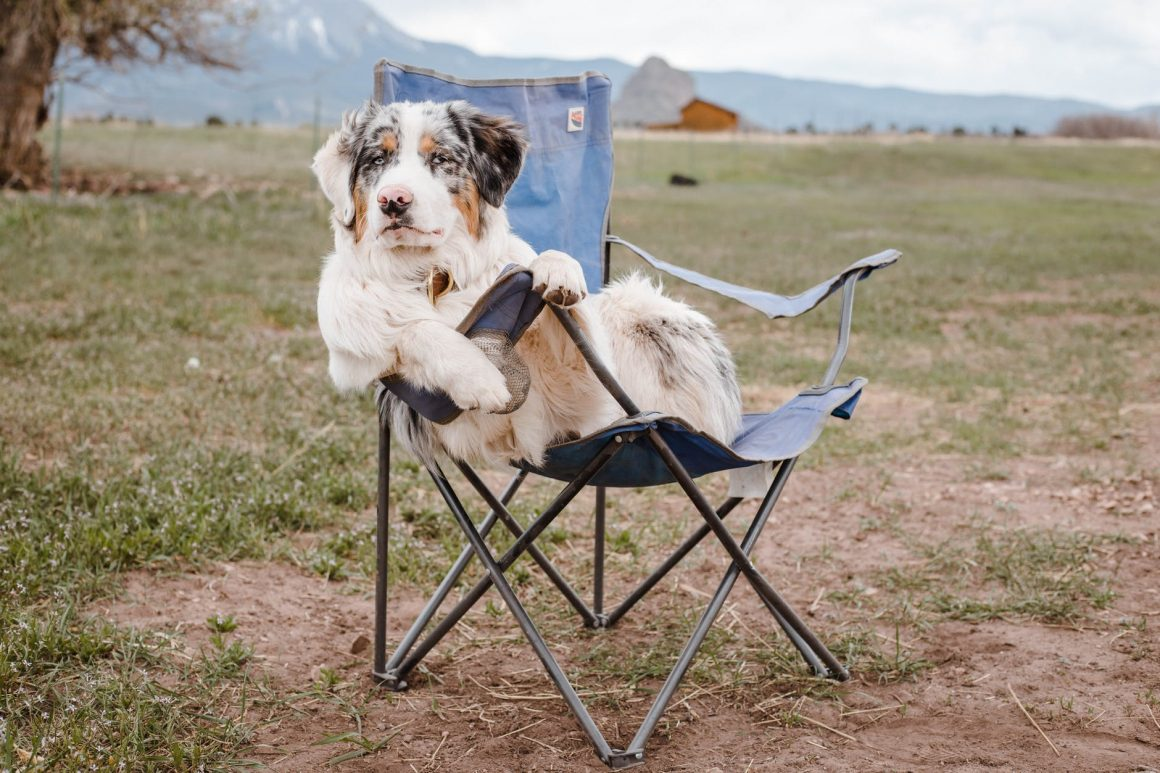 funny australian shepherd sitting on camp chair in mountainous terrain