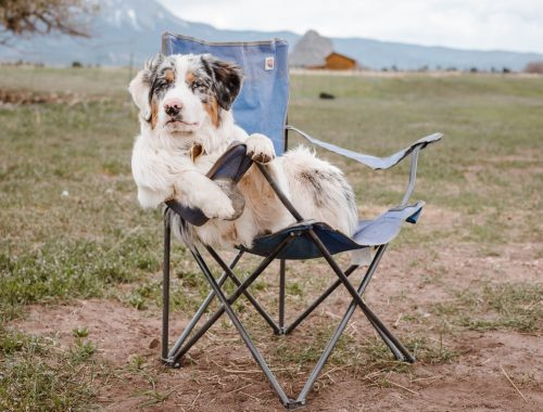 funny australian shepherd sitting on camp chair in mountainous terrain