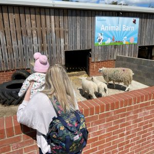 Woman holding up baby to look at an ewe and two lambs