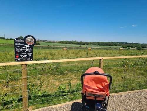 Pushchair positioned by fence surrounding grazing zebras